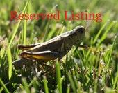 Reserved Listing for JWhiz