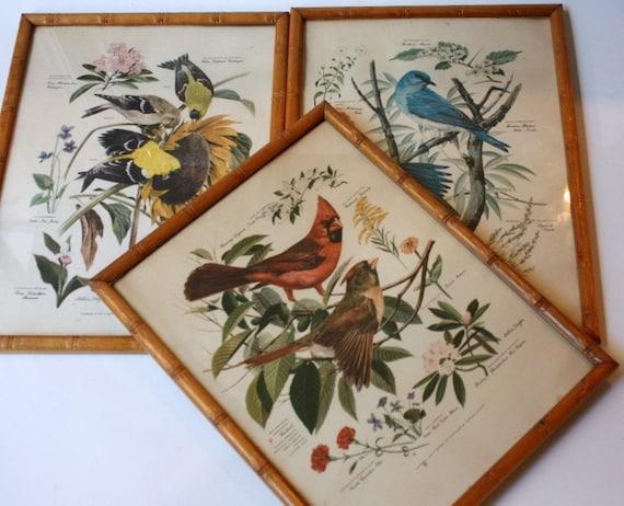 Vintage Arthur Singer Bird Prints By Sevenbc On Etsy