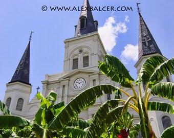 Photograph Print - Banana Plant Saint Louis Cathedral, New Orleans - french quarter nola jackson square big easy church