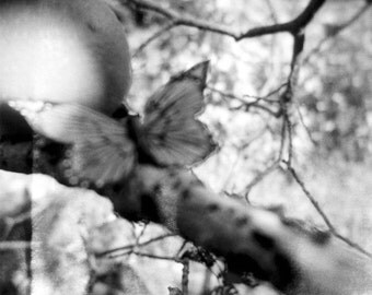 butterfly photo, dreamy butterfly, autumn photo, butterfly in tree, black and white, decor, holga, nature photo, fall photo, surreal, tree