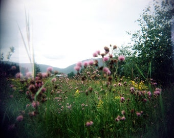 summer flower photo, spring field photo, landscape photo, home decor, holga, nature, flowers, pink, green, spring, summer, dreamy, field