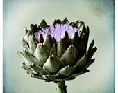 Blooming Artichoke 8x8 Fine Art Photographic Print