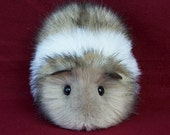 Guinea pig in TWolf and White