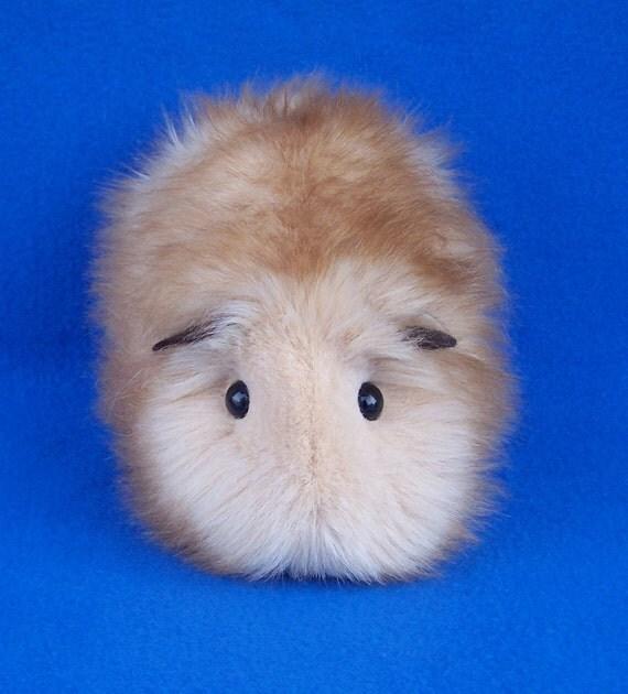 Honey Blonde Guinea Pig