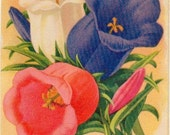 CANTERBURRY BELLS! (Finest Mixed) Vintage Flower Seed Packet Tuckers Seed House Lithograph (Carthage, Missouri)