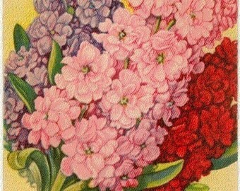 STOCKS! (Finest Mixed) Vintage Flower Seed Packet Tucker's Lithograph (Carthage, Missouri)