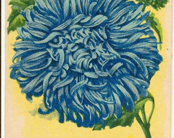 ASTER! (Blue Flame) Vintage Flower Seed Packet Tuckers Seed House Lithograph (Carthage, Missouri)