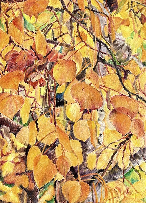 Golden Leaves Pencil Drawing- Colorado Art- Yellow Aspen Tree- Fall Art-  Realistic- Colored Pencil- 6x9