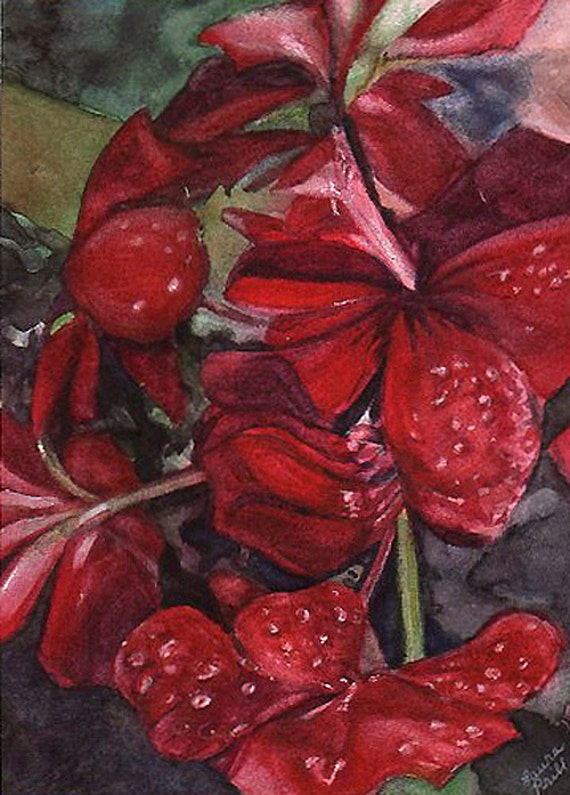 Red Floral Watercolor Print- Garnet, Crimson- Realistic Flower  Art- Geranium- Fine Art Print