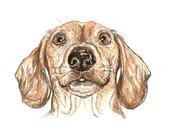 Dachshund, Daschund, Sausage Dog, Original Portrait Painting, Chorizo