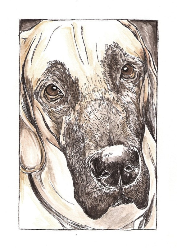 Fawn Great Dane Dog Art, close up Great Dane ink and water color painting.