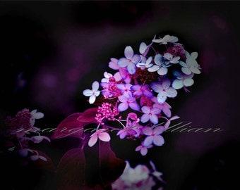 A Dark Flower - 4X6 Fine Art Photograph