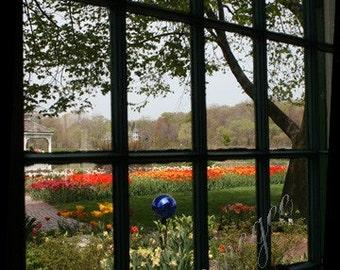 Tulips Through Window - 5x7