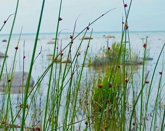 Photography - Shore at Mission Point
