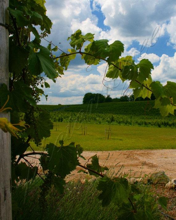 The Vineyard - 8x10