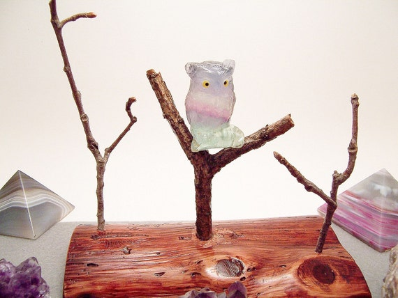 Fluorite Owl Sitting in Tree