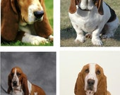 Lot Of 12 Bassett Hound Dog Fabric Panel Quilt Squares