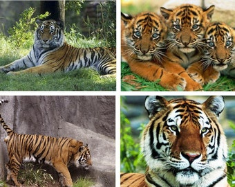 Lot Of 4 Tigers Fabric Panel Quilt Squares