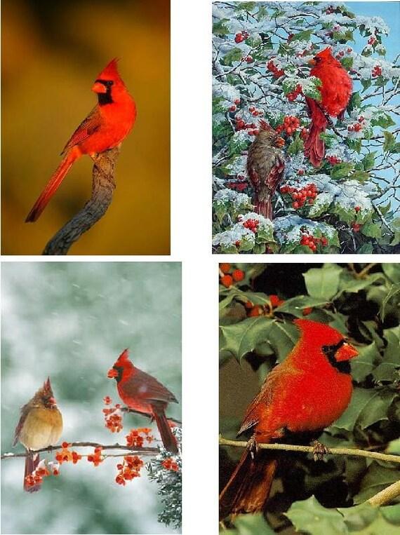 Bird Fabric Panel Lot of 6 Cardinal Bird Fabric