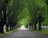 Gentle Covering Green Trees Nature Photography 5x7