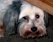 SCRUFFY The New York City Dog Blank Photograph Card
