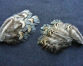 11 Mixed Ringneck Pheasant Feathers - Cruelty Free