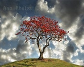 Earth Day. Tree in full bloom in the Spring. Fine Art Photography.