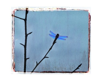 Dragonfly. Fine Art Photography.