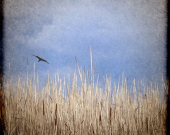 Vintage Bird flying over the swamp. Fine Art Photography