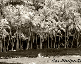 Coconut Trees in Infra Red. Fine Art Photography.