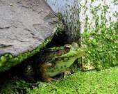 Frog Pond 8X10 nature photography print