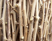RESERVED Seasoned Organic Mulberry Wood Sticks - Gourmet Dental Chew Treats for Pet Chinchilla Rabbit Rat - 6 Pounds Bulk
