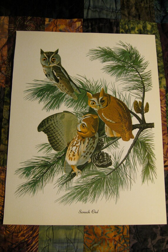 John J. Audubon Bird Print- Screech Owl