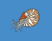 Nautilus ( 11x14 Fine Art Print )