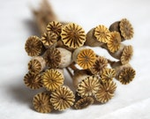 Homegrown Organic Dried Poppy Pods