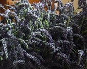 Lavender by the pound, Many varieties to choose from
