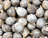 50 Jobs Tears Seeds - natural beads