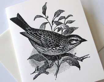 Sparrow Bird Note Cards Set of 10