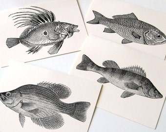 Fresh Fish Notecards - Set of 12