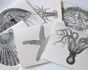 Jellyfish, Octopus, Lobster, Starfish, Puffer Fish, Shell Sealife Note Card Stationery Set of 6 Cards