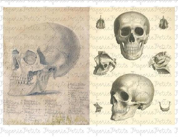 Medical Skulls Digital Download Collage Sheet