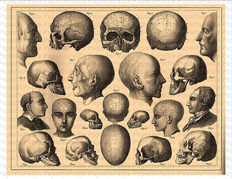 Vintage Skulls 114