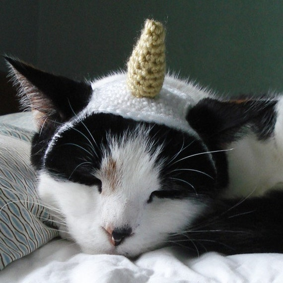 pet hat - unicorn