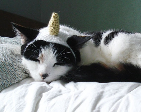 pet hat - unicorn