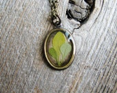 Real Leaf Necklace Green Barberry Leaves Resin Pendant Antique Brass Botanical Jewelry Nature Inspired