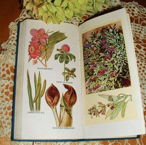 1934 First Edition Book The Herbalist Herbs Joseph E. Meyer