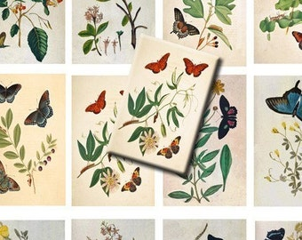 Digital Collage Sheets Vintage Botanical Butterfly Plants, Bushes- Clipart, Illustrations and Labels