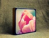 The Blooming Tulip - Photo Block