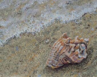 Seashell Card,  Blank Card, Art Card,Beach Card, Note Card