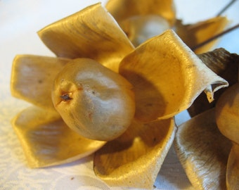 natural dried woodroses